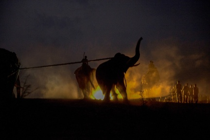 Capturing an elephant - Photo by Kalyan Varma